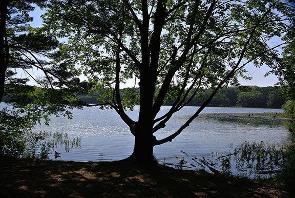 Yankee Springs RA: Hall Lake Trail